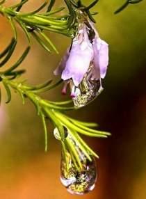 Скачать песни капелька росы